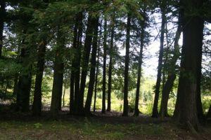 treefarm20158